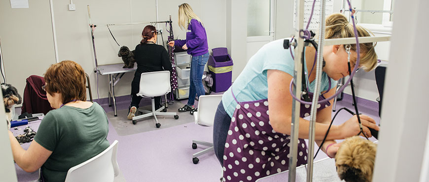 Pet Groomer Training Courses
